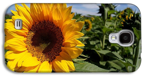 Sunflower Glow Galaxy S4 Case by Kerri Mortenson