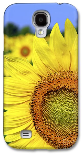 Sunflower In Field Galaxy S4 Case by Elena Elisseeva