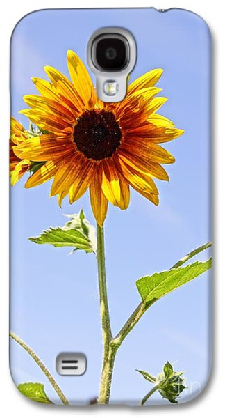 Sunflower In The Sky Galaxy S4 Case by Kerri Mortenson