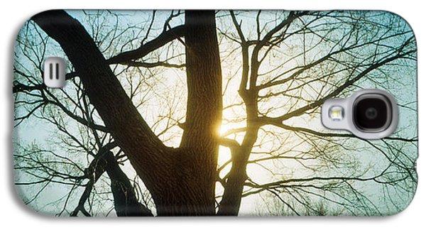 Sunlight Shining Through A Bare Tree Galaxy S4 Case