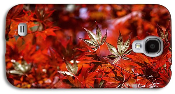 Sunlit Japanese Maple Galaxy S4 Case