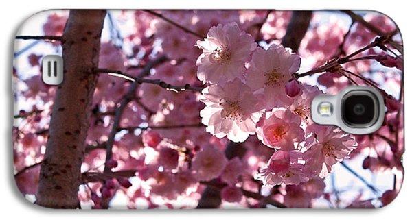 Sunlit Cherry Blossoms Galaxy S4 Case