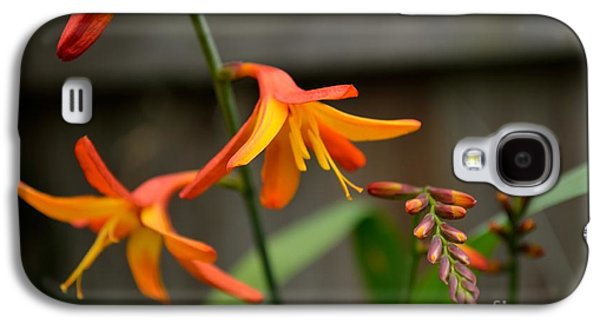 Sunny Crocosmia Galaxy S4 Case