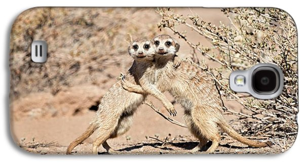 Suricates At Play Galaxy S4 Case by Tony Camacho