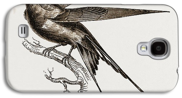 Swallow Of Palestine Galaxy S4 Case