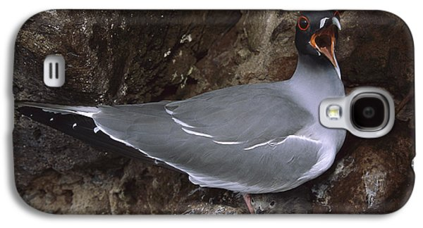 Swallow-tailed Gull And Chick Calling Galaxy S4 Case