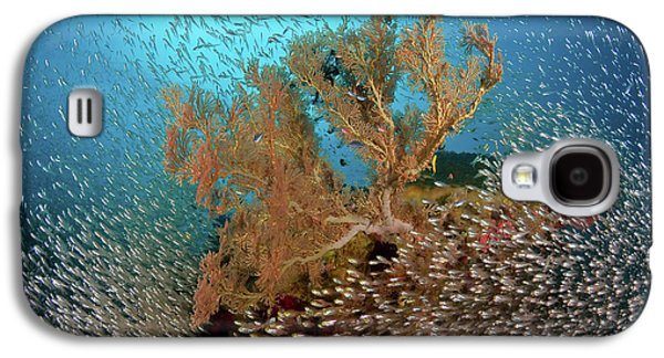 Sweeper Fish (pempheridae Galaxy S4 Case by Jaynes Gallery