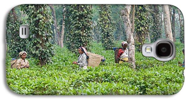 Tea Harvesting, Assam, India Galaxy S4 Case