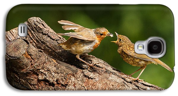 Feeding Young Galaxy S4 Case - Tea Time For Robins by Izzy Standbridge