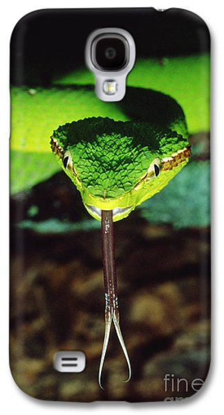 Temple Viper Galaxy S4 Case by Gregory G. Dimijian