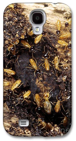 Termites Galaxy S4 Case