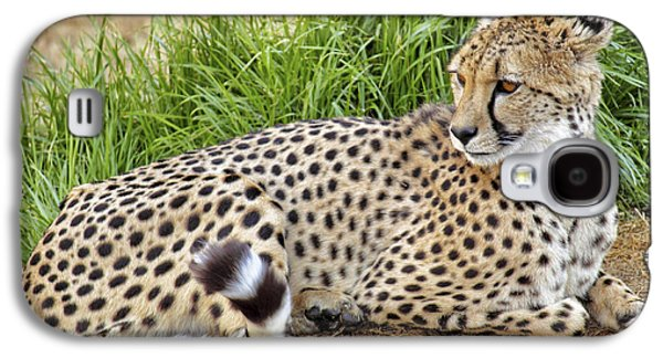 The Beautiful Cheetah Galaxy S4 Case
