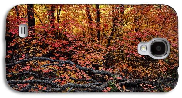 The Beauty Of Autumn  Galaxy S4 Case by Saija  Lehtonen
