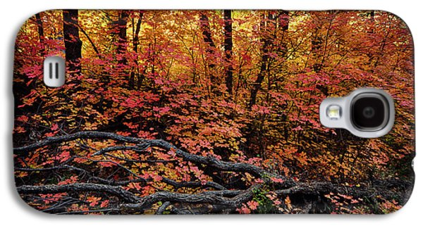 The Beauty Of Autumn  Galaxy S4 Case by Saija  Lehtonen