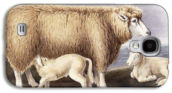 Feeding Young Galaxy S4 Case - The Cotswold Breed by David Low