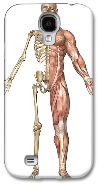 The Human Skeleton And Muscular System Galaxy S4 Case by Stocktrek Images