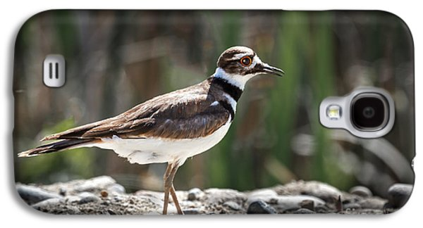 Killdeer Galaxy S4 Case - The Killdeer by Robert Bales