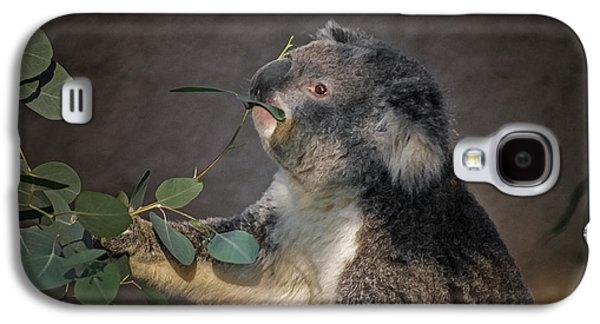 The Koala Galaxy S4 Case by Ernie Echols