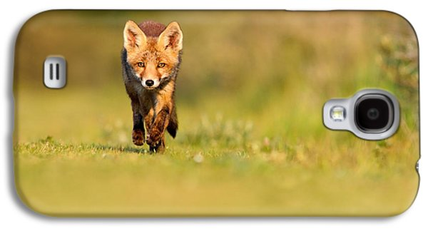 The New Kit On The Grass - Red Fox Cub Galaxy S4 Case