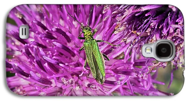 Thick-legged Flower Beetle On Knapweed Galaxy S4 Case by Bob Gibbons