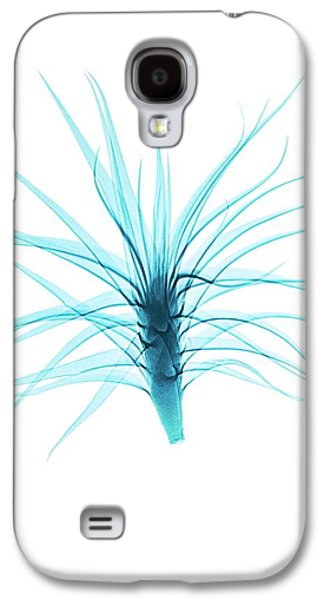 Tillandsia Air Plant Galaxy S4 Case