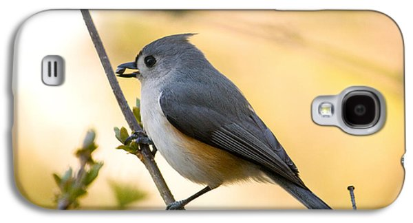 Titmouse Galaxy S4 Case - Titmouse In Gold by Shane Holsclaw