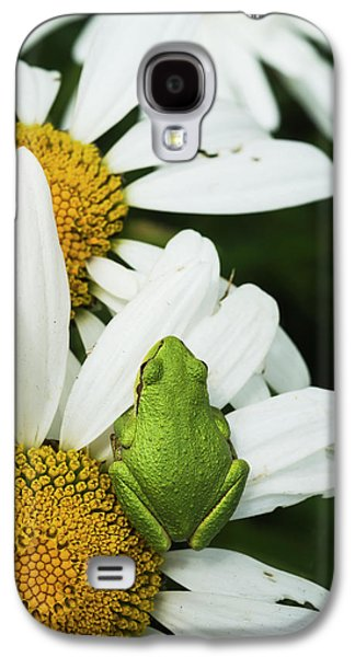 Tree Frog Rests On A Daisy  Astoria Galaxy S4 Case by Robert L. Potts