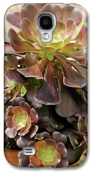 Tree Houseleek (aeonium Arboreum) Galaxy S4 Case by Adrian Thomas