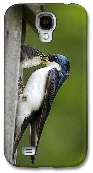 Tree Swallow Feeding Chick Galaxy S4 Case by Christina Rollo