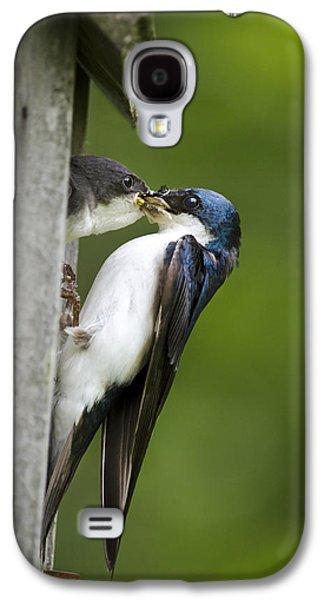 Tree Swallow Feeding Chick Galaxy S4 Case