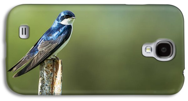 Tree Swallow Sitting On A Post Galaxy S4 Case