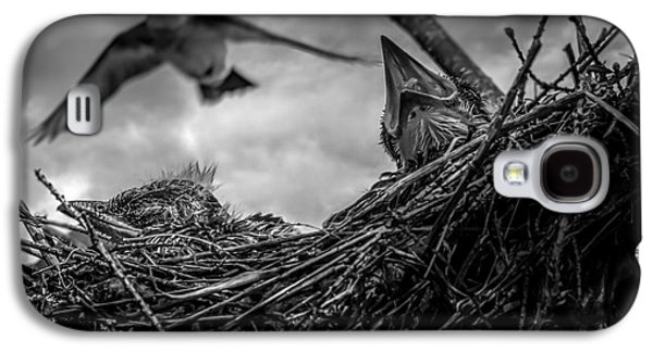Tree Swallows In Nest Galaxy S4 Case