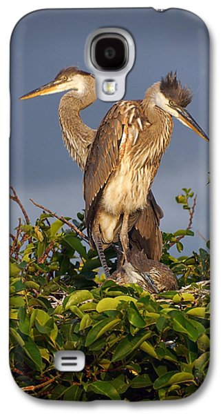 Trio Of Blue Heron Chicks Galaxy S4 Case