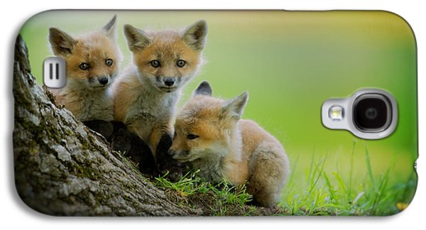 Trio Of Fox Kits Galaxy S4 Case by Everet Regal