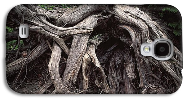Troots Of A Fallen Tree By Wawa Ontario Galaxy S4 Case by Randall Nyhof