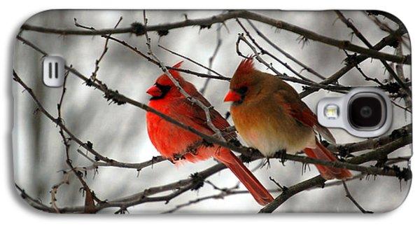 Cardinal Galaxy S4 Case - True Love Cardinal by Peggy Franz