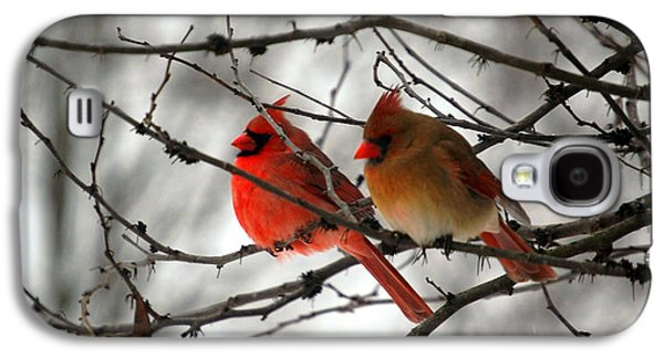 True Love Cardinal Galaxy S4 Case