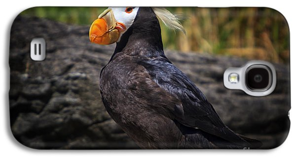 Tufted Puffin Galaxy S4 Case