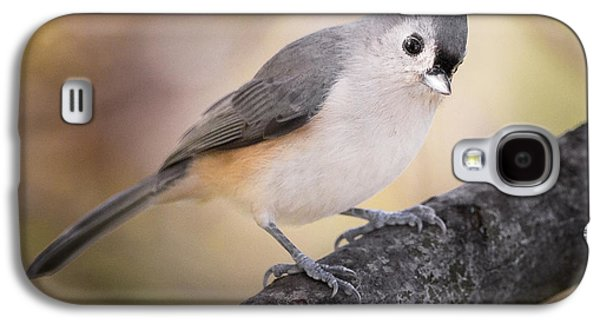 Tufted Titmouse Galaxy S4 Case by Bill Wakeley