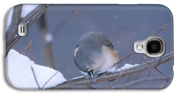 Tufted Titmouse Eating Seeds Galaxy S4 Case by Paul J. Fusco