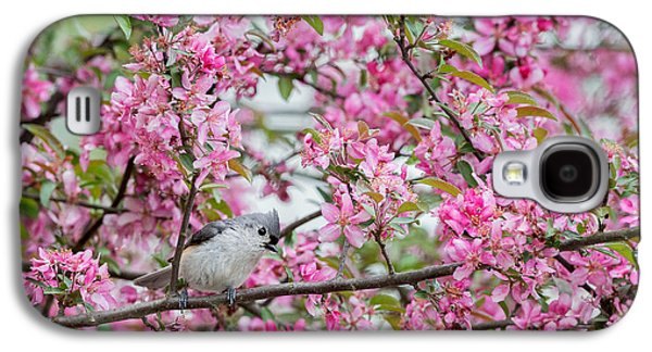 Tufted Titmouse In A Pear Tree Galaxy S4 Case by Bill Wakeley