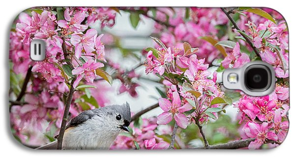 Tufted Titmouse In A Pear Tree Square Galaxy S4 Case by Bill Wakeley
