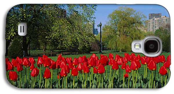 Tulips In A Garden, Boston Public Galaxy S4 Case by Panoramic Images