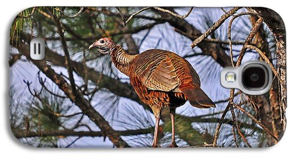 Turkey In A Tree Galaxy S4 Case by Al Powell Photography USA