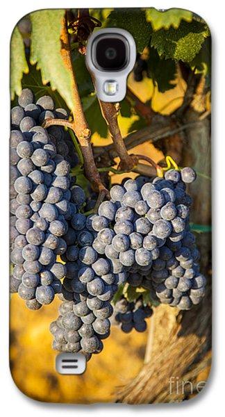 Tuscan Vineyard Galaxy S4 Case by Brian Jannsen
