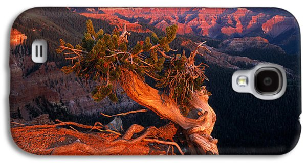 Twisted Forest Galaxy S4 Case