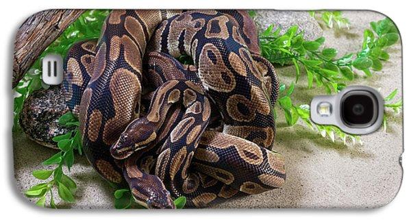 Python Galaxy S4 Case - Two Burmese Pythons Python Bivittatus by Panoramic Images