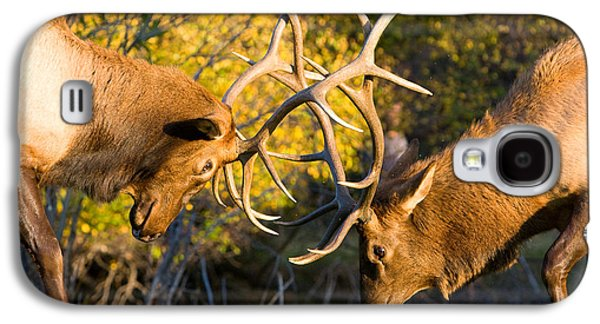Two Elk Bulls Sparring Galaxy S4 Case by James BO  Insogna