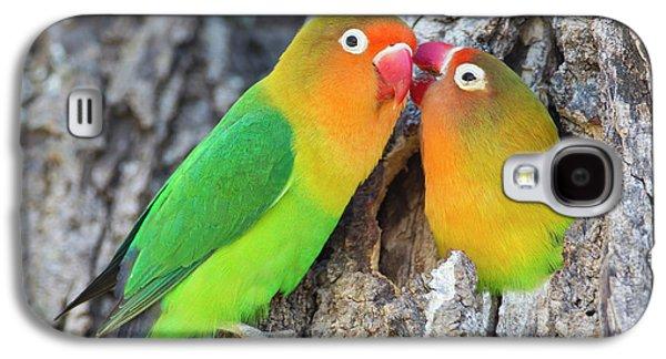 Lovebird Galaxy S4 Case - Two Fischer's Lovebirds (agapornis by James Heupel