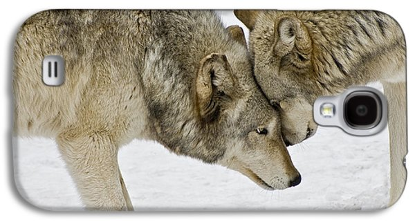 Two Wolves In  A Staredown Galaxy S4 Case
